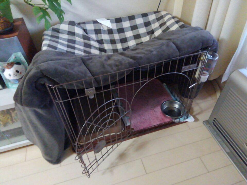 犬のケージの現状
