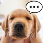 ヒトと犬と絆とオキシトシン
