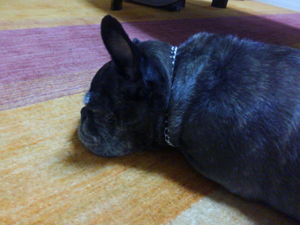 絨毯の上で眠るゆず子さん3