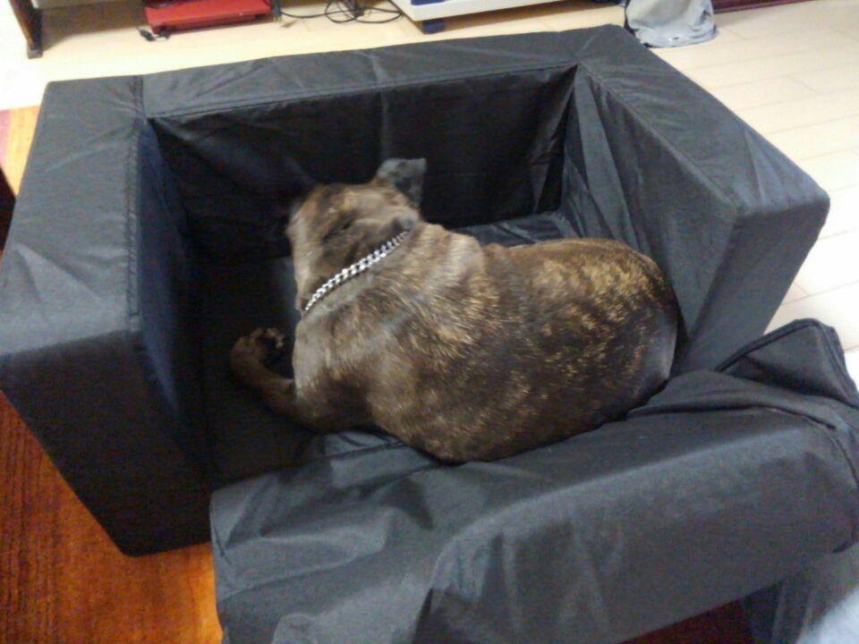 【犬の居場所を変える】犬が落ち着く居場所を作ってみたよ!!12