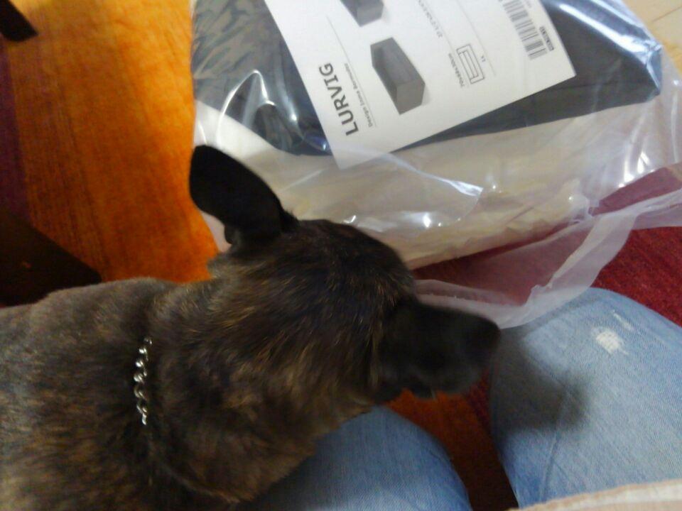 【犬の居場所を変える】犬が落ち着く居場所を作ってみたよ!!2