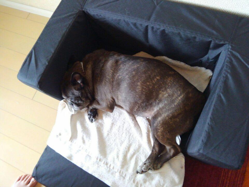 【犬の居場所を変える】新しい居場所でゆず子さんは安心を得られたのか?3