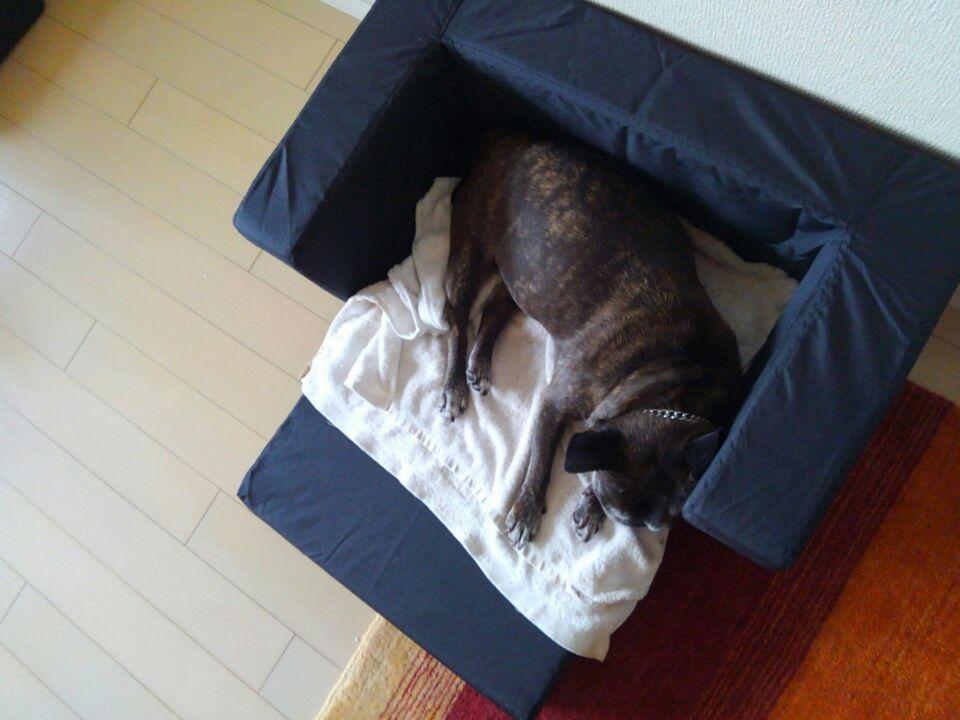 【犬の居場所を変える】新しい居場所でゆず子さんは安心を得られたのか?2