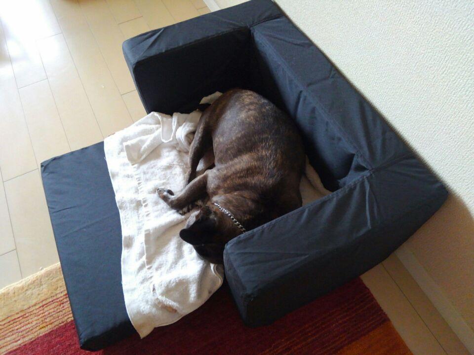 【犬の居場所を変える】新しい居場所でゆず子さんは安心を得られたのか?1