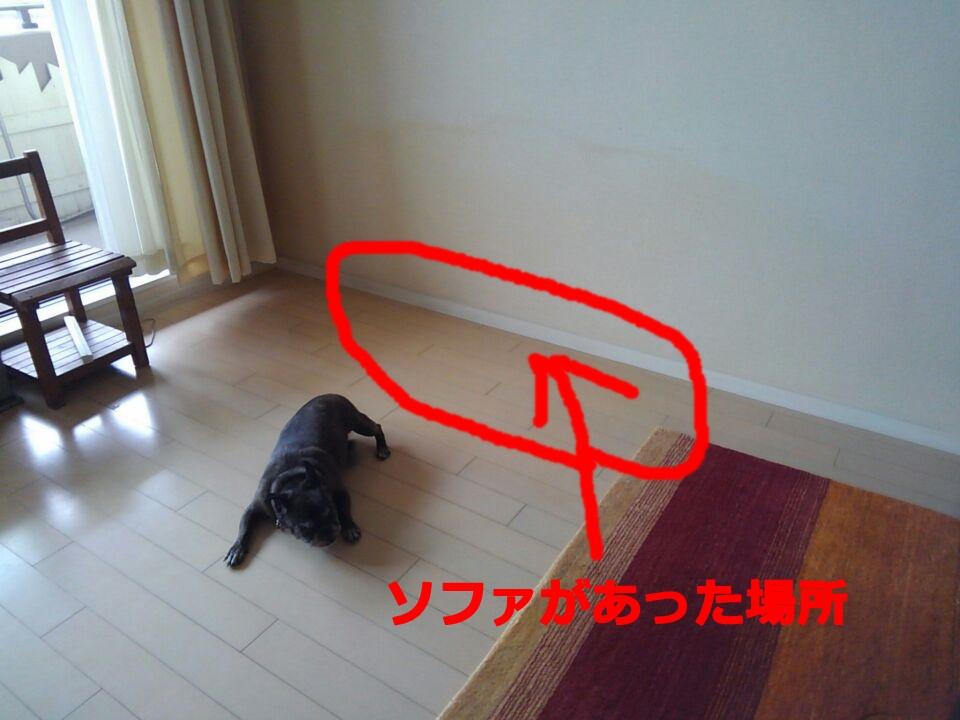 犬が落ち着く居場所の条件