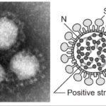 新型コロナウイルス感染時の身体症状と治癒までの経過まとめ