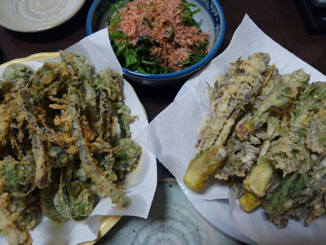 春の山菜こごみとタラの芽の栄養価と効能 天ぷらで旬をいただく2