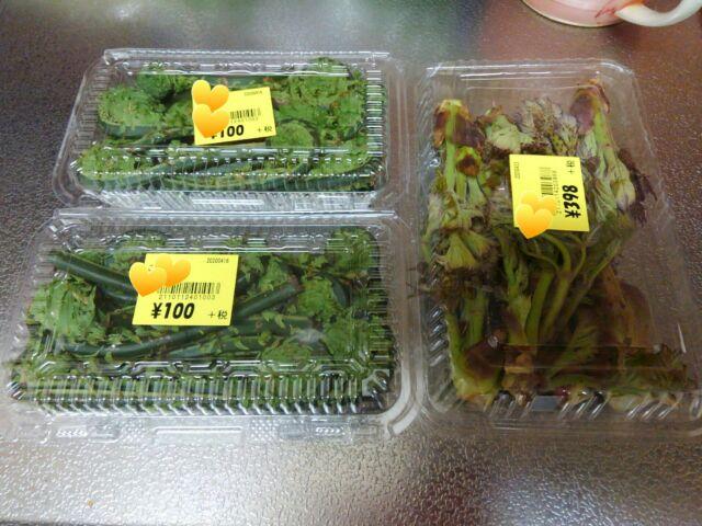 春の山菜こごみとタラの芽の栄養価と効能 天ぷらで旬をいただく