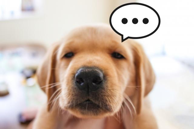 大人ADHD、本当は会話に入りたいし、自分の好きなことを遠慮せずに話したい!!