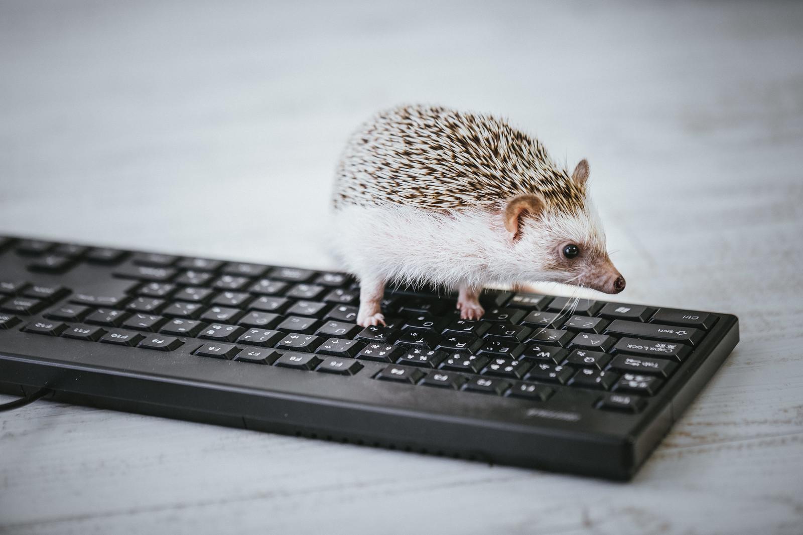 ブログ(WordPress)のアクセスを伸ばすために記事更新をインデックスしてもらう方法!